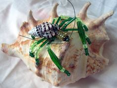 Idea: Beaded Hermit Crab.