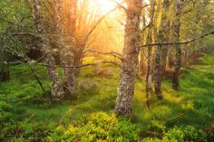 Photograph Heavenly Grove by Florent Courty on Small Towns, Serenity, Woodland, Natural Beauty, Sunrise, Scene, Clouds, Nature, Plants