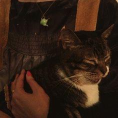 sleepy cat  - @ri_bon- #webstagram