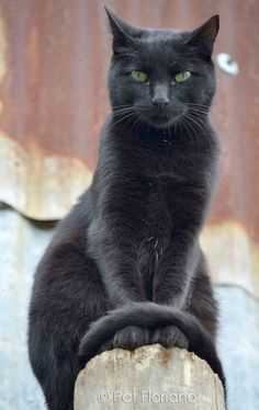 \In ancient time cats were worshipped as gods. They have never forgotten this.\ --Anonymous