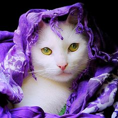 I don't know which I love more, the gorgeous purple cover or the beautiful mesmerizing eyes.