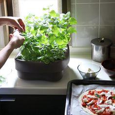 normann COPENHAGEN Washing-up Bowl for plants ノーマン コペンハーゲン ウォッシングボウル