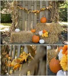 Theme Halloween, Halloween Photos, Fall Halloween, Halloween Mini Session, Halloween Ideas, Fall Photo Booth, Galloway, Fall Harvest Party, Picture Backdrops