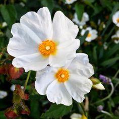 Santa Cruz CA: #flowers #spring #California #athens  #crete #gdansk #malaga  #tunis #kiev #vilnius #norwich #praha  #jerusalem #tehran #tokyo #marseilles  #lima #bestofsantacruz #panama #buenosaires #islamargarita  #toronto #santacruztoday #santacruzlife #santacruz  #capitola #sanjose  #santacruznow #visitsantacruz by slawekwojtowicz