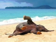 Baby Elephant Playing on The Beach For The First Time