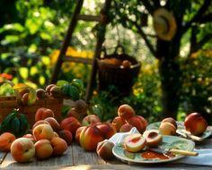 gigibee1974:  Peaches