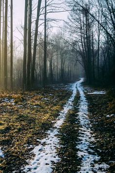 Road to the forest (no location given) by Jake