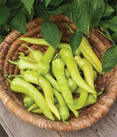 "Pepper, Pepperoncini  Delicious peppers perfect for pickling.	  If you are a pickled pepper person, this Italian pepper is for you. Expect gratifyingly large crops of 5-6""-long thin, slightly wrinkled peppers. At first, the peppers are a pleasing light green, and, as the season progresses, shift into bright red. Take your pick: you can harvest the sweet, thin-walled fruits in either the green or red stage, and enjoy them raw, pickled or cooked. Harvest about 75 days after transplant."