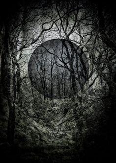 Black sun forest silhouette