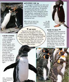 Penguin Facts | Penguin Place Penguin Facts, Fish Scales, Penguins, Animals, Nature, Animales, Naturaleza, Animaux, Penguin