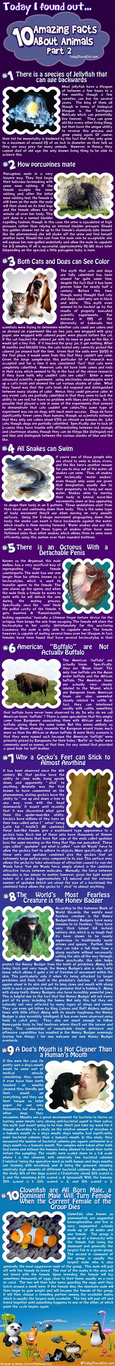 10 Amazing Animal Facts: Part 2