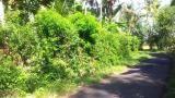 Bali Real Estate/ Land for Sale: Land for Sale at Langudu village of Pangkung Tibah Tabanan #Bali, 20 minutes drives from #Canggu