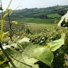 Azienda Agricola Fratelli Aimasso nel Diano d'Alba, Piemonte