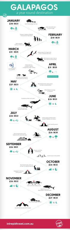 The best (and worst) times to visit the Galapagos Islands - infographic | Intrepid Travel Blog