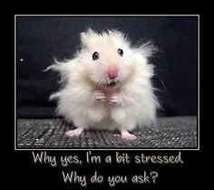 Why yes, I'm a bit stressed. Why do you ask? - How Funny