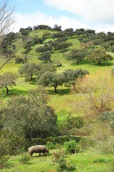 Jabugo - Sierra de Aracena