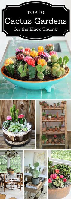 Top 10 Cactus Garden for the Black Thumb #indoor_garden_cactus
