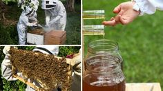 Harvesting honey with Flow™ is easier on the beekeeper and so much easier on the bees. | Crowdfunding is a democratic way to support the fundraising needs of your community. Make a contribution today!
