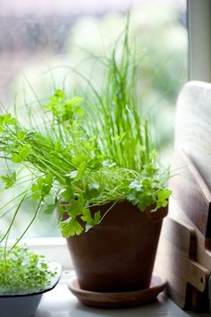 Herb Mix / Parsley +