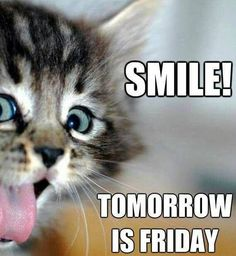 It's only Thursday but you're ready for the weekend, Well we feel you! That is why we have compiled 15 great tomorrow is Friday quotes to keep you excited this Thursday. Friday is right around the corner! Good Morning Thursday, Good Morning Good Night, Morning Post, Morning Images, Sunday, Funny Good Morning Quotes, Funny Quotes, Cat Quotes, Animal Quotes