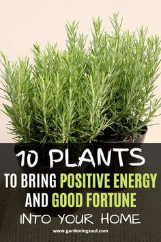 Here's a list of the 10 plants that will bring positive energy and good fortune in your home, so make sure you get one! Best Indoor Plants, Indoor Garden, Garden Soil, Garden Plants, Moss Garden, Feng Shui, Snake Plant Care, Lucky Bamboo Plants, Lucky Plant