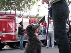 Ollie and a firetruck Agility Training, Training Tips, Crazy Dog Lady, Fire Trucks, Everything, Pup, Dog Stuff, Dogs, Diy Dog