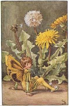 Illustration for the Dandelion Fairy from Flower Fairies of the Spring. A boy fairy sits beside a dandelion flower.     Author / Illustrator  Cicely Mary Barker