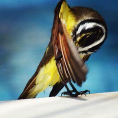 I use antiperspirant Cool Instagram Pictures, Bird, Animals, Animales, Animaux, Birds, Animal, Birdwatching, Animais