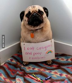 It's true. Sometimes it even happens to my five year old owner.