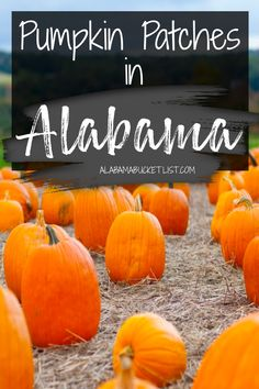 Fall is here and with the autumn season comes the pumpkin patch, a favorite fall activity. Here are the best pumpkin patches in Alabama! Alabama Bucket List | Best Pumpkin Patches in Alabama | Alabama Pumpkin Patches | Pumpkin Patches in Alabama | Fall Activities | Fall in Alabama | Alabama in Fall | Alabama | Visit Alabama | Family Activities in Alabama | Family Travel | Fun With Kids | Things to Do with Kids in Alabama | Halloween | Autumn | Explore Alabama | #alabama #pumpkinpatch…