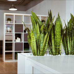 Топ-9 комнатных растений, которые увлажняют воздух в доме и дарят здоровье - Я Покупаю Cactus Plants, Home Decor, Homemade Home Decor, Cactus, Decoration Home, Interior Decorating