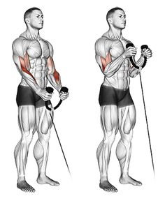 biceps workout Create a sculpted back and build your biceps with this amazing workout. This article is going to take you through one of many beneficial back and biceps workouts. This mu Back And Bicep Workout, Forearm Workout, Biceps Workout, Back And Biceps, Bicep Cable Workout, Weight Training Workouts, Gym Workout Tips, Fun Workouts, At Home Workouts