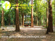 kerala packages - tour packages in kerala Cheap Honeymoon Packages, Plan My Trip, Munnar, Kerala, Tours, Holiday Packages, India Tour, Travel, Couples