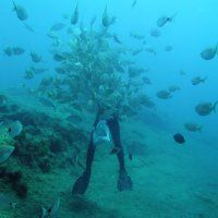 Teneriffa / Tauchen im Salzwasser / Fotos   Nies.ch Diving, Aquarium, Photos, Canarian Islands, Tenerife, Sevilla Spain, Goldfish Bowl, Scuba Diving