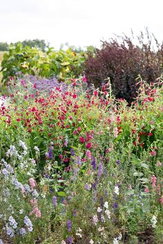 Give your garden a colourful look by growing many different types of flowers. They should be organic, because it is pro-environmental. Different Types Of Flowers, Nye, Holland, Environment, Mexican, Backyard, Organic, Creative, Plants