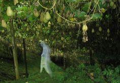 La treille chouchoute - 7 Lames la Mer - La famille vit à #Salazie, un lieu sauvage et retiré dit « Bois de pommes ». La grande maison en bois, construite de bric et de broc, s'ouvre sur une vaste cour en terre battue... #LaReunion