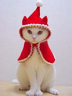 Little Red Riding Christmas Cat
