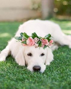 Wedding photography ideas with animals, pets, dogs Wedding Pets Decor Cute Funny Animals, Cute Baby Animals, Funny Dogs, Animals And Pets, Cute Dogs And Puppies, I Love Dogs, Pet Dogs, Doggies, Beautiful Dogs