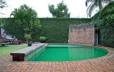 O muro tomado pela unha-de-gato inspirou a escolha da cor da piscina, revestida por pastilhas de vidro verdes. Casa da designer Vera Cortez
