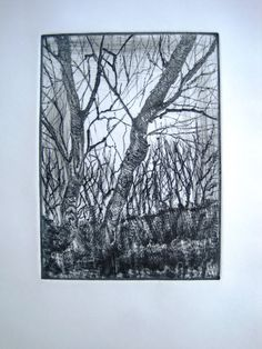 Dry Point Etching Winter Trees Grey detailed small Fine Art  Print by Zinnia Gallery