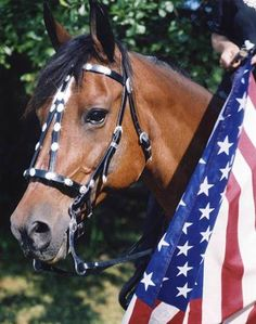 """""""Memorial Day – a time for remembering those who gave their lives selflessly to protect and preserve the American values of freedom. Over 1.5 million horses and mules died in the Civil War, the war for which Memorial Day was originally enacted. Tens of thousands of American war horses, donkeys and mules overcame their flight instinct to charge into a fight that was not theirs. Battles were won and lost from the backs of the amazing war horse, and we do not forget their sacrifice."""" - Colorado ..."""