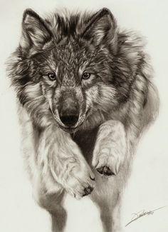 A beautiful wolf drawing