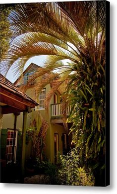 Green In St. Augustine Fl Canvas Print / Canvas Art By Patrick  Flynn