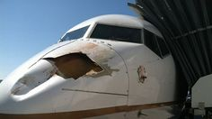 From ABC News: United Airlines Flight Strikes Bird on Descent to Denver