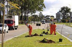 Águas de Pontal: Curitiba plantou mais de 10 mil árvores nativas em...
