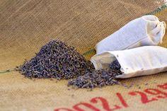 Culinary Lavender.