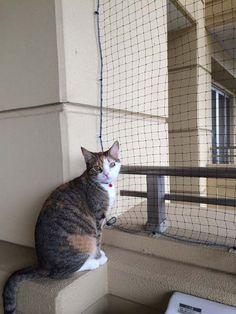 猫ちゃんのベランダからの脱走防止、転落防止目的で購入された お客様の声 Part1