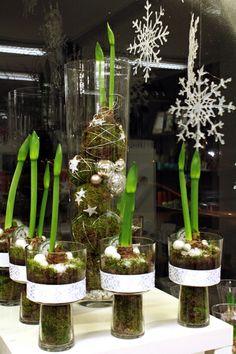 http://holmsundsblommor.blogspot.se/2013/11/skyltning-i-vitt.html Skyltning i vitt, med amaryllis (hippeastrum) i glasvas och mossbollar