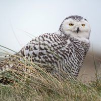 Learn Digiscoping and you can take photos of that distant wild bird and other wildlife!
