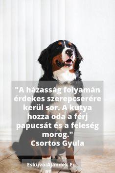 Esküvői gratuláció idézet Humor, Dogs, Animals, Animales, Animaux, Humour, Pet Dogs, Funny Photos, Doggies
